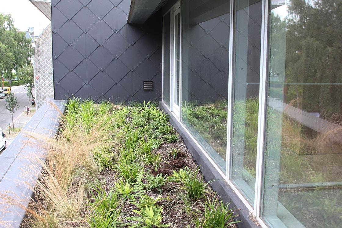 Siergrassen op het dak_project06