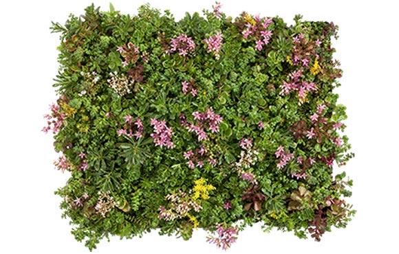 verschillende-methodes-voor-het-aanbrengen-van-vegetatie