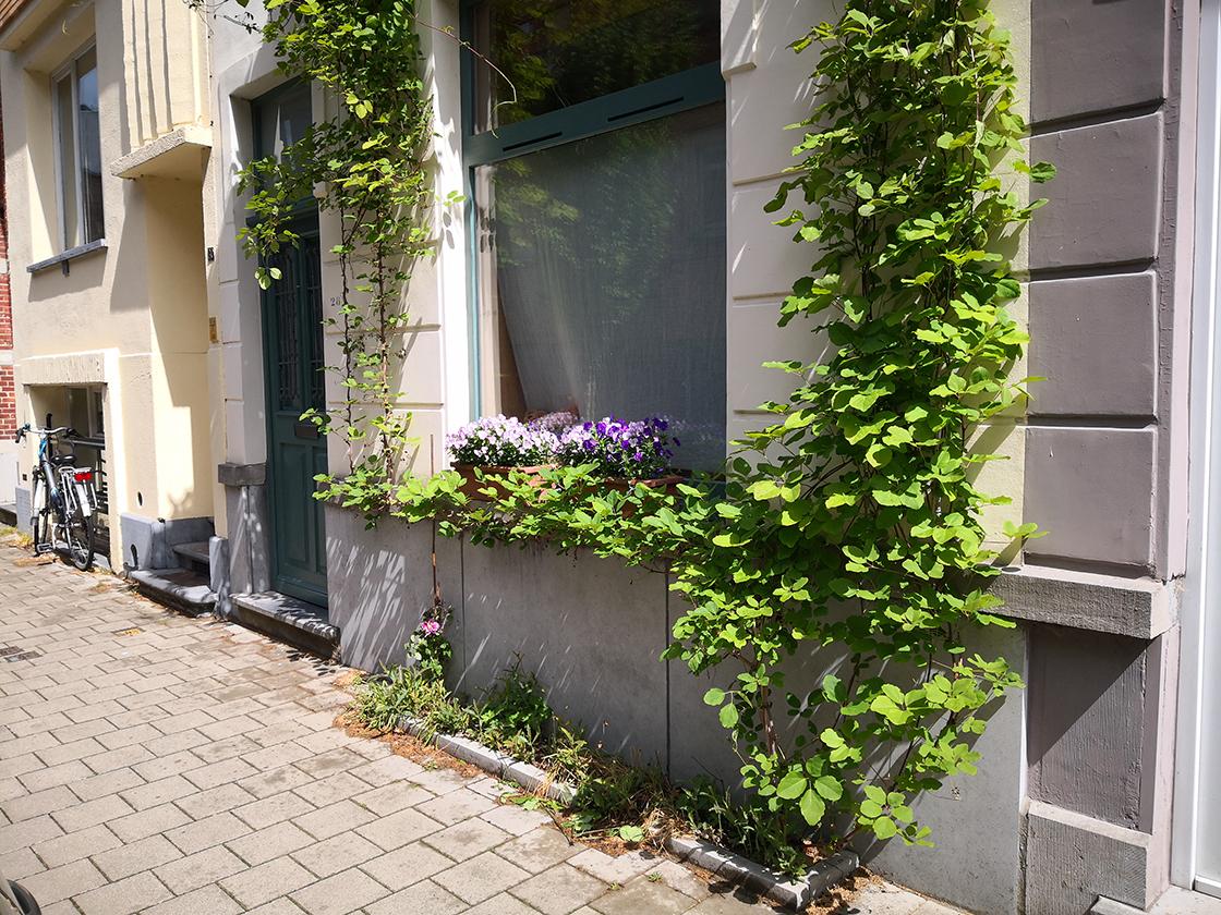 groenslinger_meibloemstraat