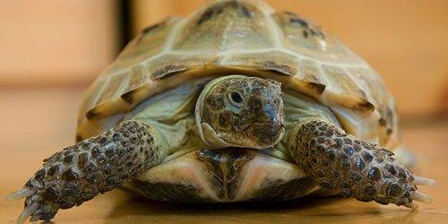 Видеть большую черепаху во сне