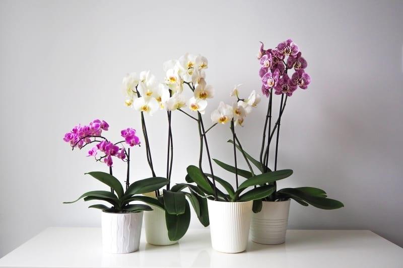 Инстаграм орхидея