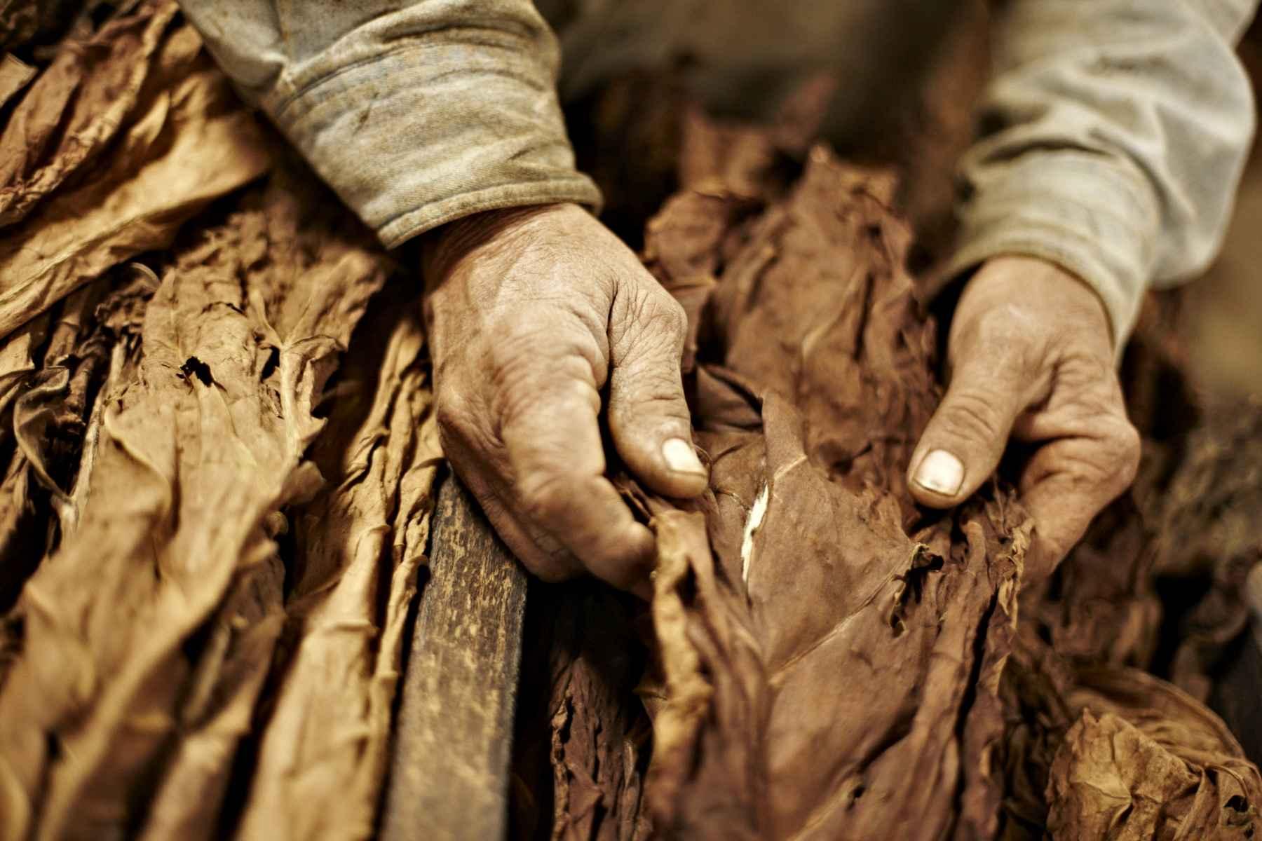 Pinkerton tobacco owensboro ky