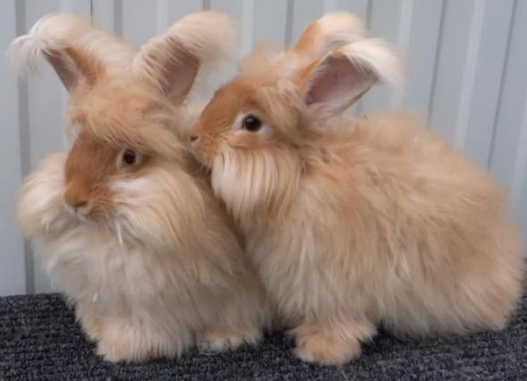 Фото кроленя
