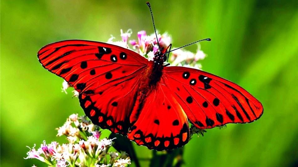 Сон бабочка красивая