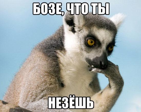 фото приколы про мем Узбагойся