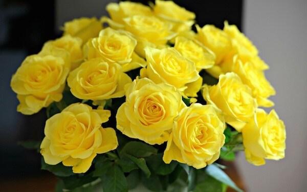 Розовые розы к чему дарят