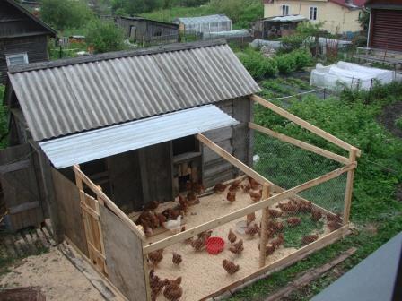 С чего начать куриный бизнес