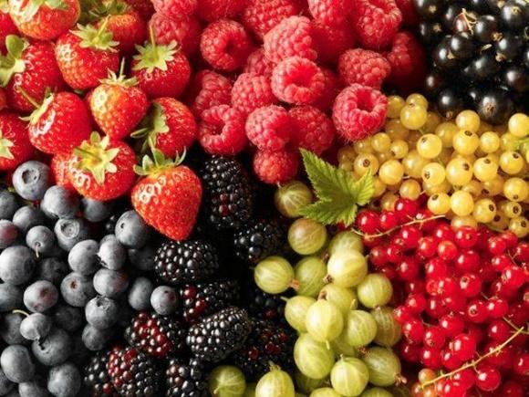 Бизнес по выращиванию ягод