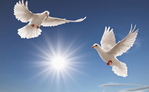 Белые голуби во сне к чему