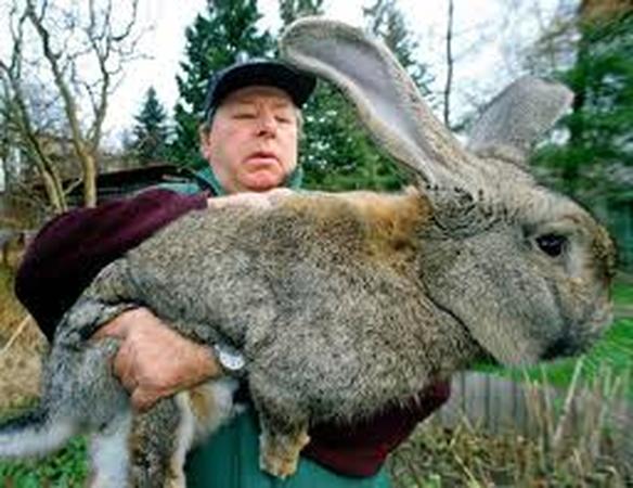 заработок на разведении кроликов