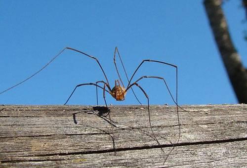 Почему пауки живут в доме