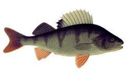 Рыбалка финская