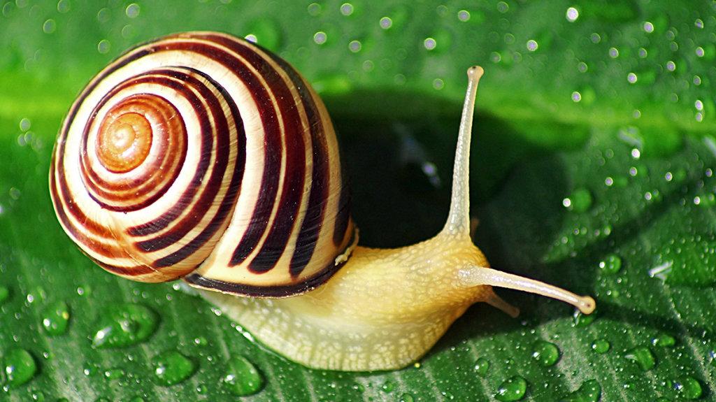 Do snails change shells