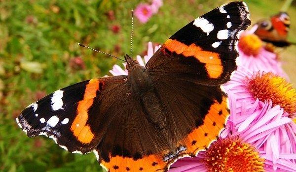 Бабочки видеть во сне