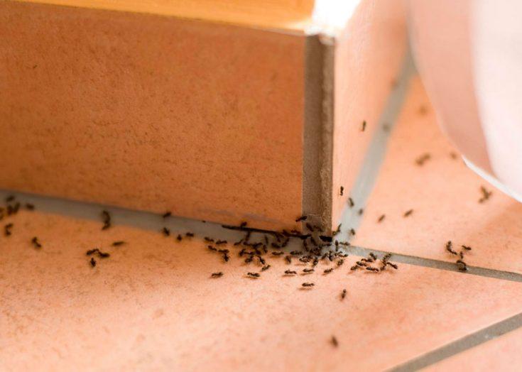 Методы борьбы с муравьями в квартире