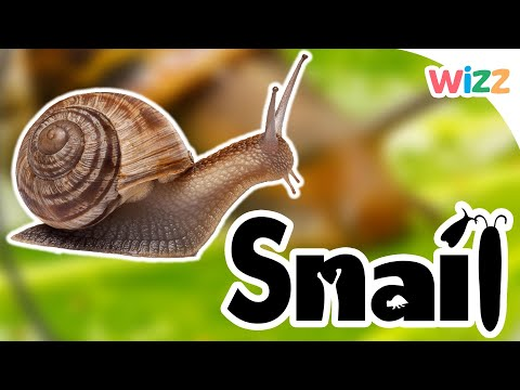 Learn about snails