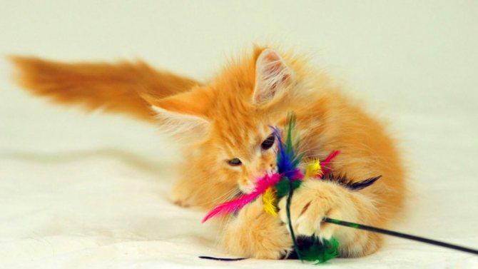 Как сделать коту