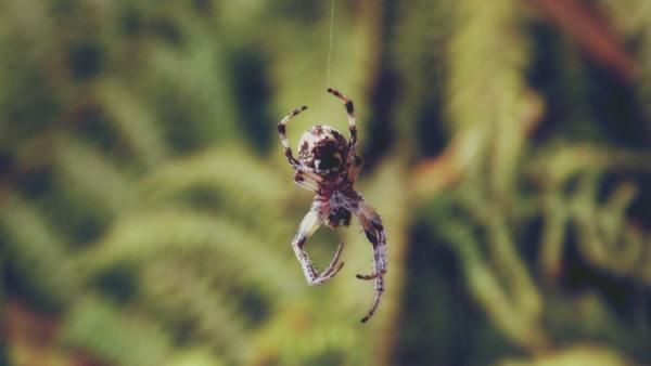 Паук спускается вниз по паутине