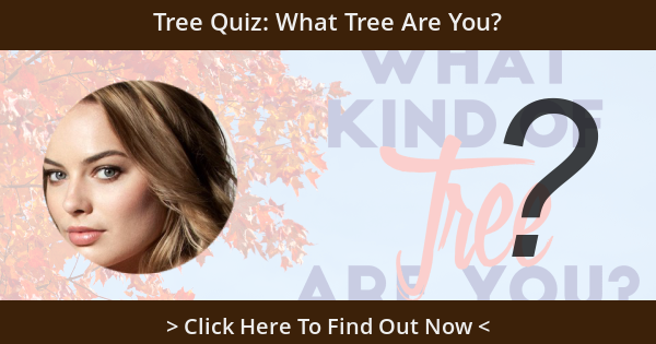 Tree Quiz: What Tree Are You?
