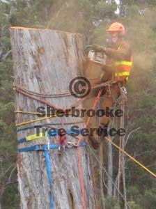 Usher tree service stony brook