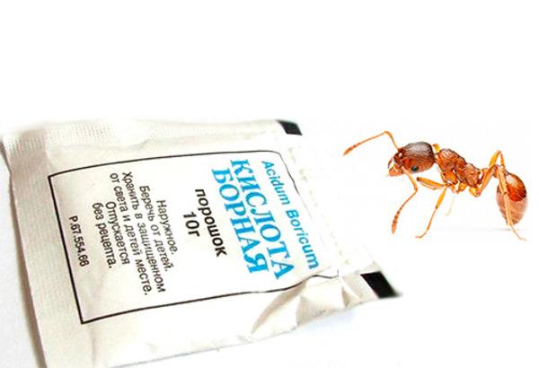 Борная кислота, как средство против муравьев