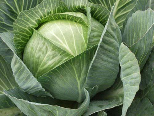 Как в микроволновке сварить капусту