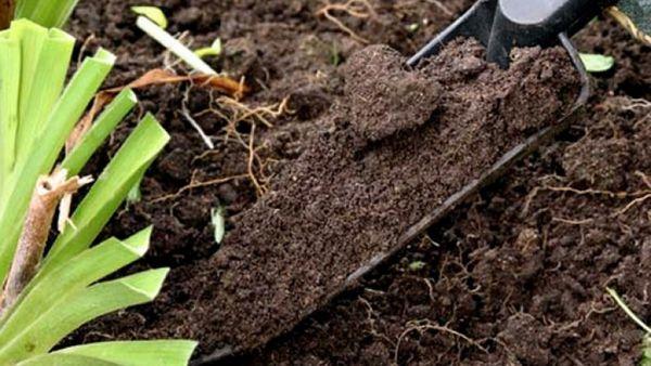 Подготовка почвы для тюльпанов