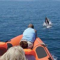 Excursiones para ver delfines en Sagres