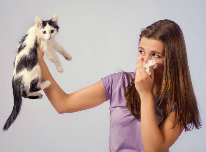 Чем вывести запах кошачьей мочи с дивана