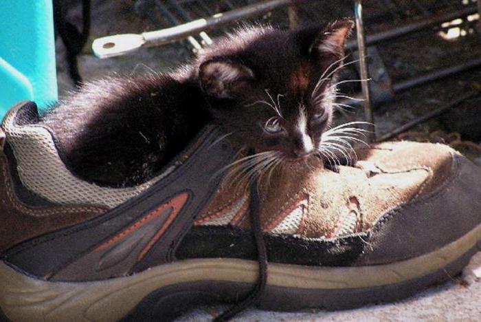 Чем убрать запах кошачьей мочи с обуви