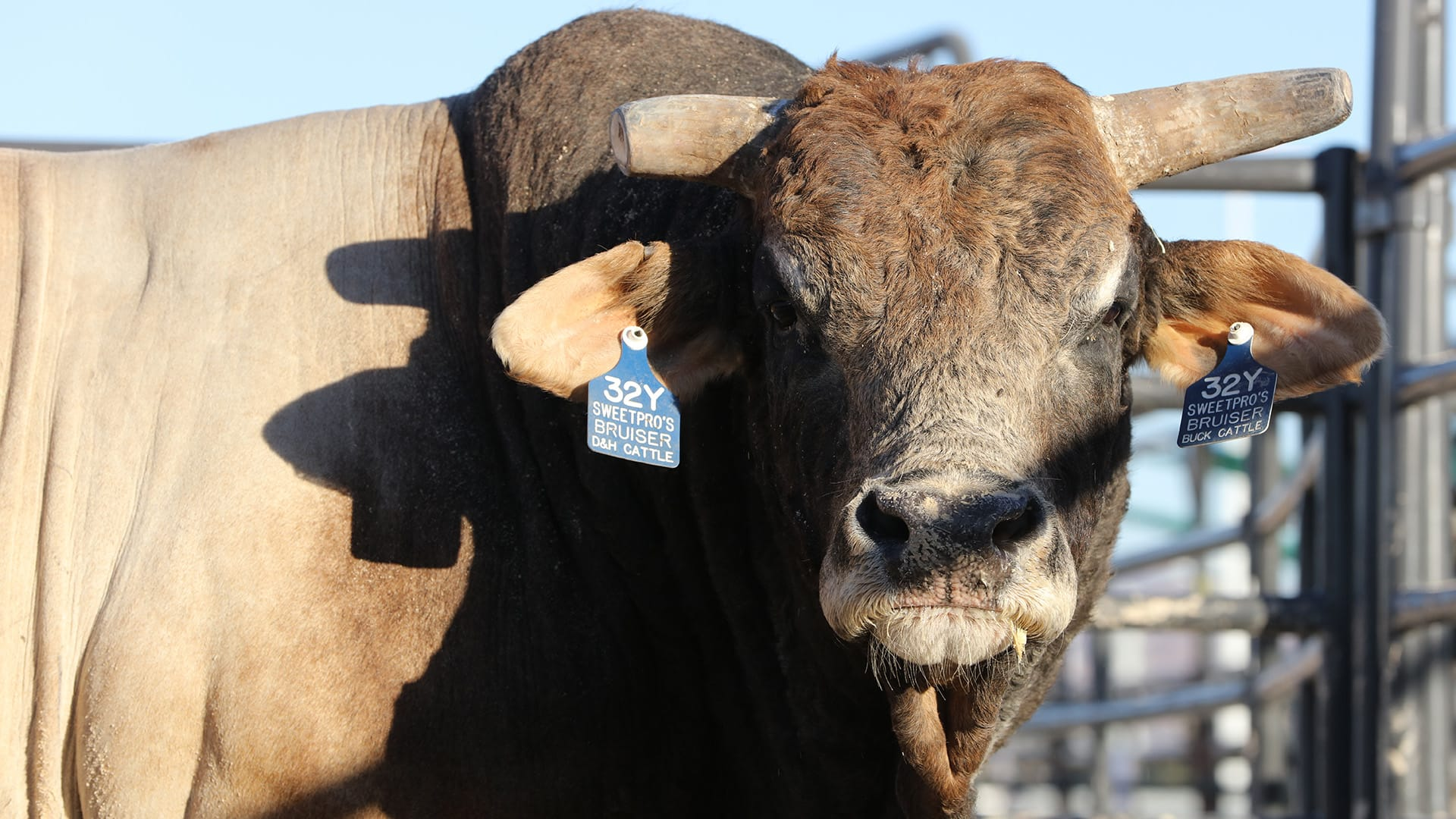 SweetPro's Bruiser getting closer to PBR return, but still at least a month away