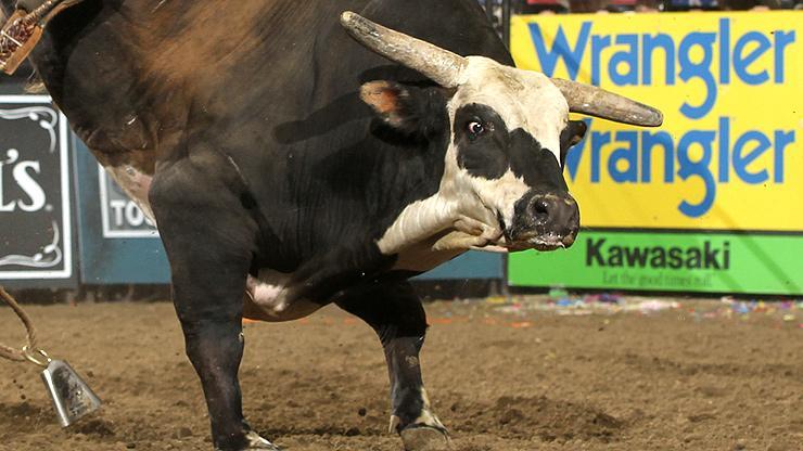 Professional Bull Riders star bull Rango passes away