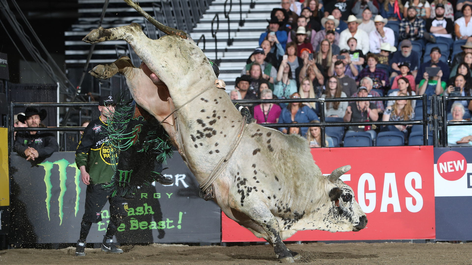 Smooth Operator extends lead in YETI World Champion Bull race