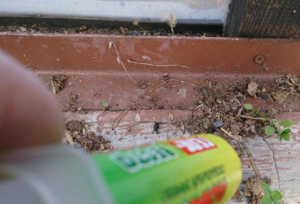 Гель, как средство против муравьев