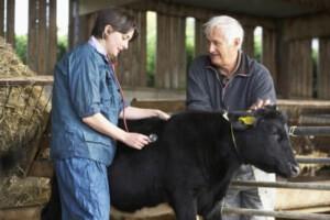 Предоставление ветеринарных услуг