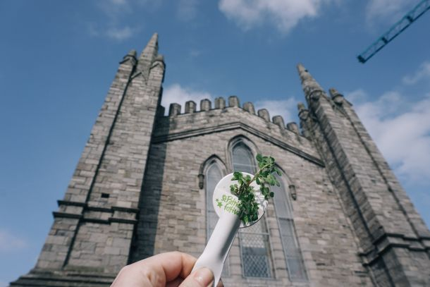 St Patrick's Cathedral in Dublin, Ireland with shamrock