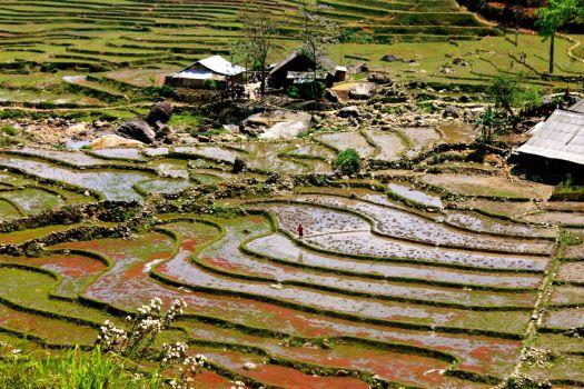 Rice paddies of Sapa, Vietnam