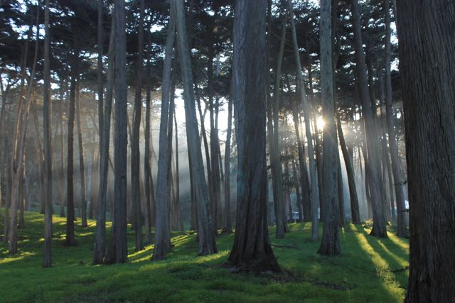 Presidio Forest SF1