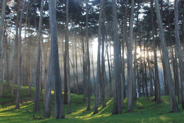 Presidio Forest SF6