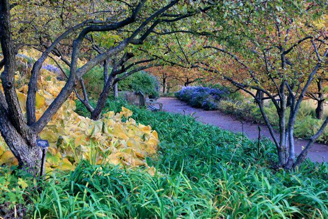 Chicago Botanic01