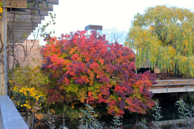 Chicago Botanic07