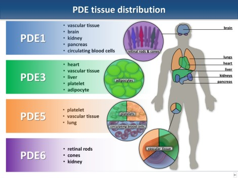 PDE Tissue Distribution