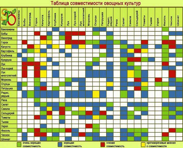 совместимость растений на огороде таблица