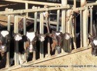 поставка скота