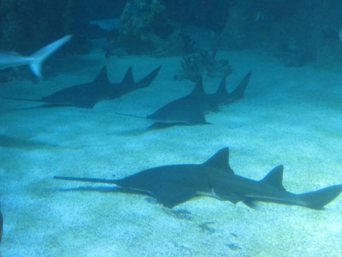 They had tons of sharks which were hard to photograph