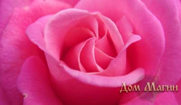 Розовый цвет во сне к чему