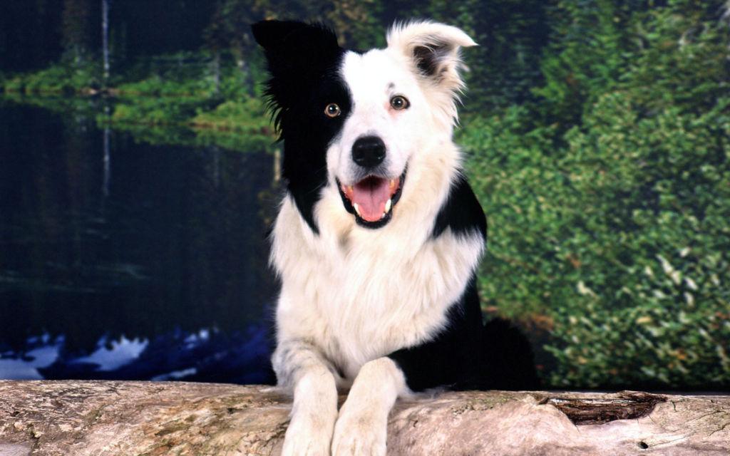 Самые добрые и верные породы собак