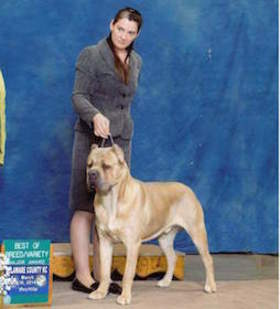 Bodyguard Cane Corso Tim & Dawn Eilber