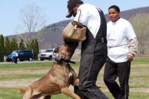 Bodyguard Cane Corso Training