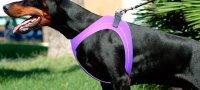 Как сшить шлейку для собаки своими руками?